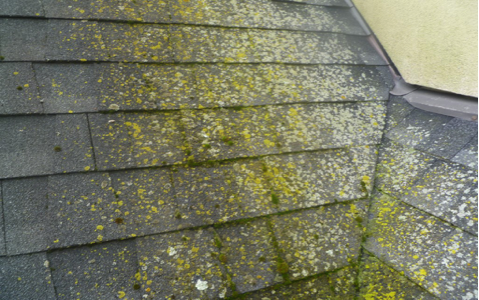 The Gloeocapsa Magma Algae (black Streaks) On Your Roof Feed On The  Limestone Embedded In Asphalt Shingles As Filler. The Filament Root System,  ...